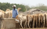 Will Somalia get enough rain this year?